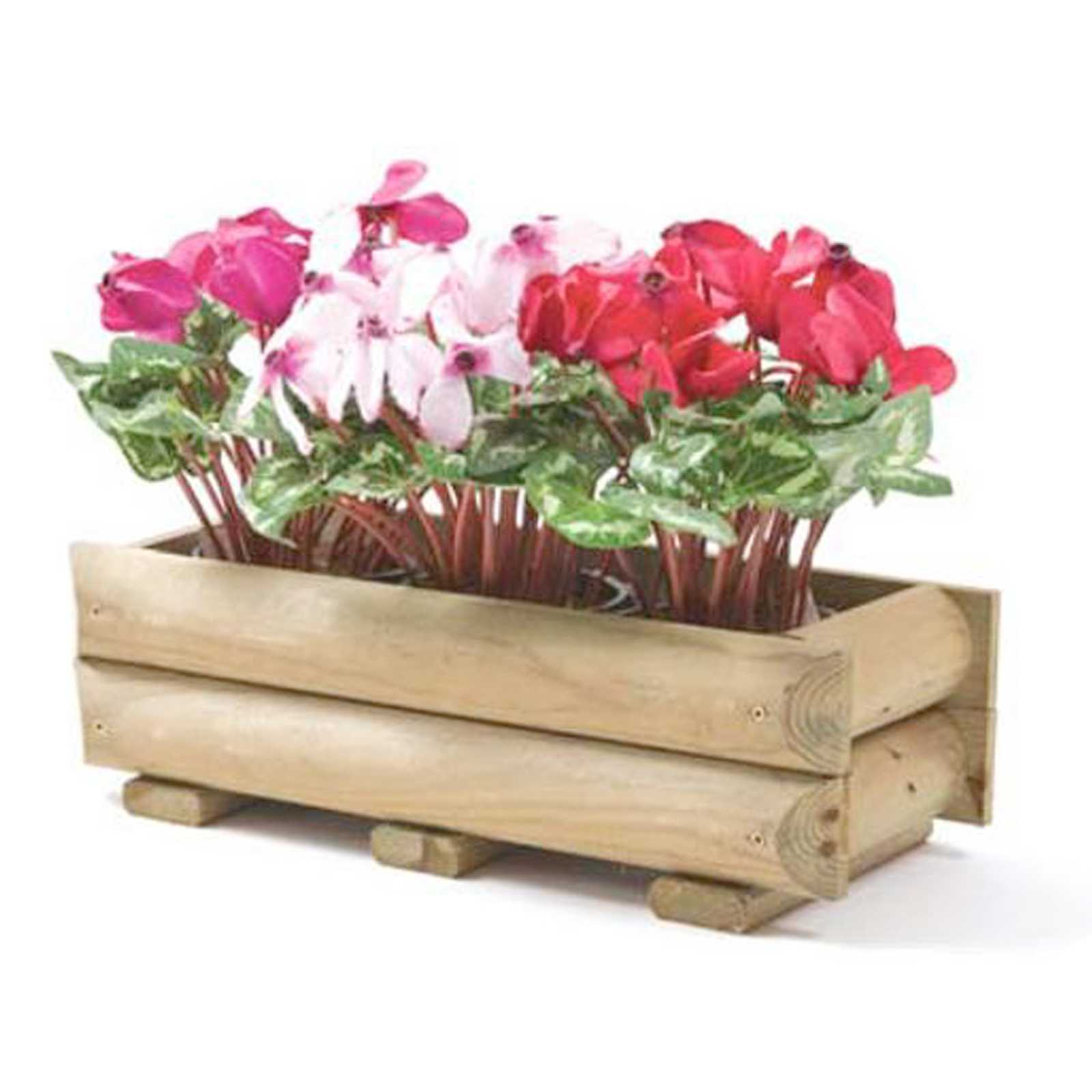 Cassetta in legno di pino impregnato cm 60x25x19h ideale per piante e fiori - Vasi e fiorirere